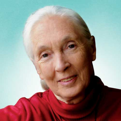Jane Goodall from THE POWER OF THE HEART