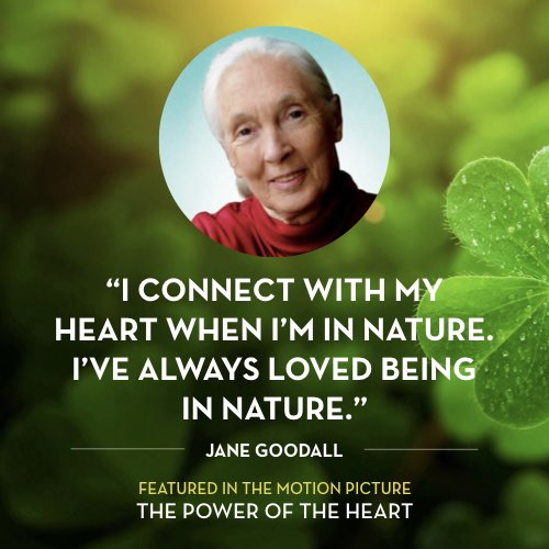 I connect with my heart when I'm in nature. I've always loved being in nature. -  Jane Goodall